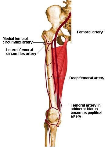 oorzaak van kramp in benen